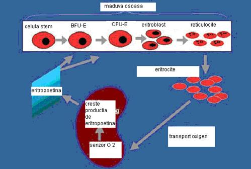 metastaza osoasa durata de viata