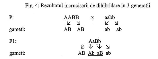 grupele de sange tabel